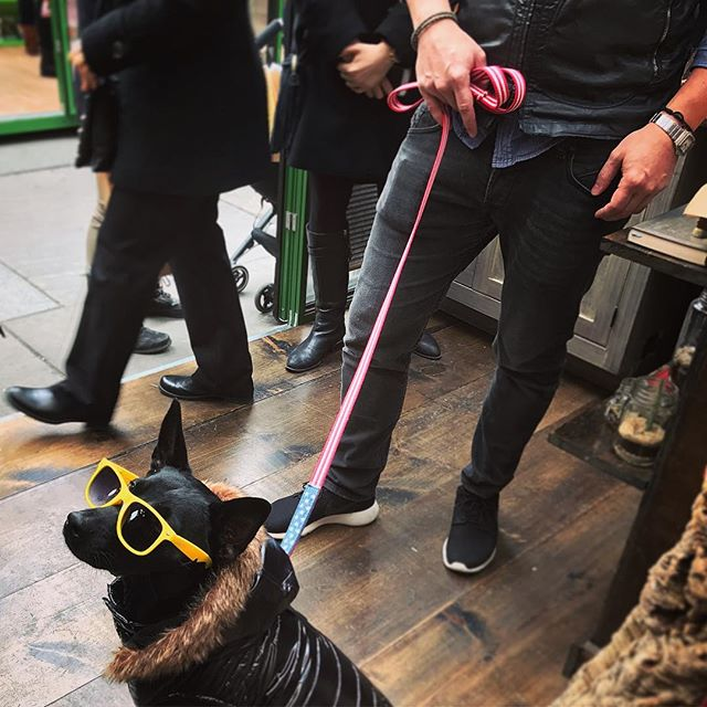 Wow! I would be happy if I could be half as cool as this dog. & he's wearing our America leash! #newyorkstyle #madeinnyc #madeinny #madeinamerica #bryantpark #bryantparkwintervillage #holidaymarket #dog #pup #dogleash #dogswag