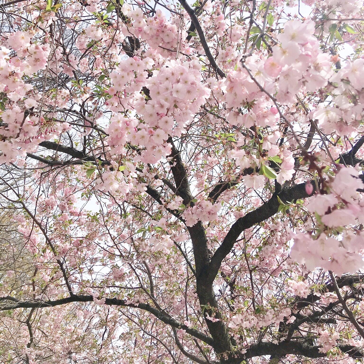 Life Lately: Spring Edition_Ashley Danyew.JPG