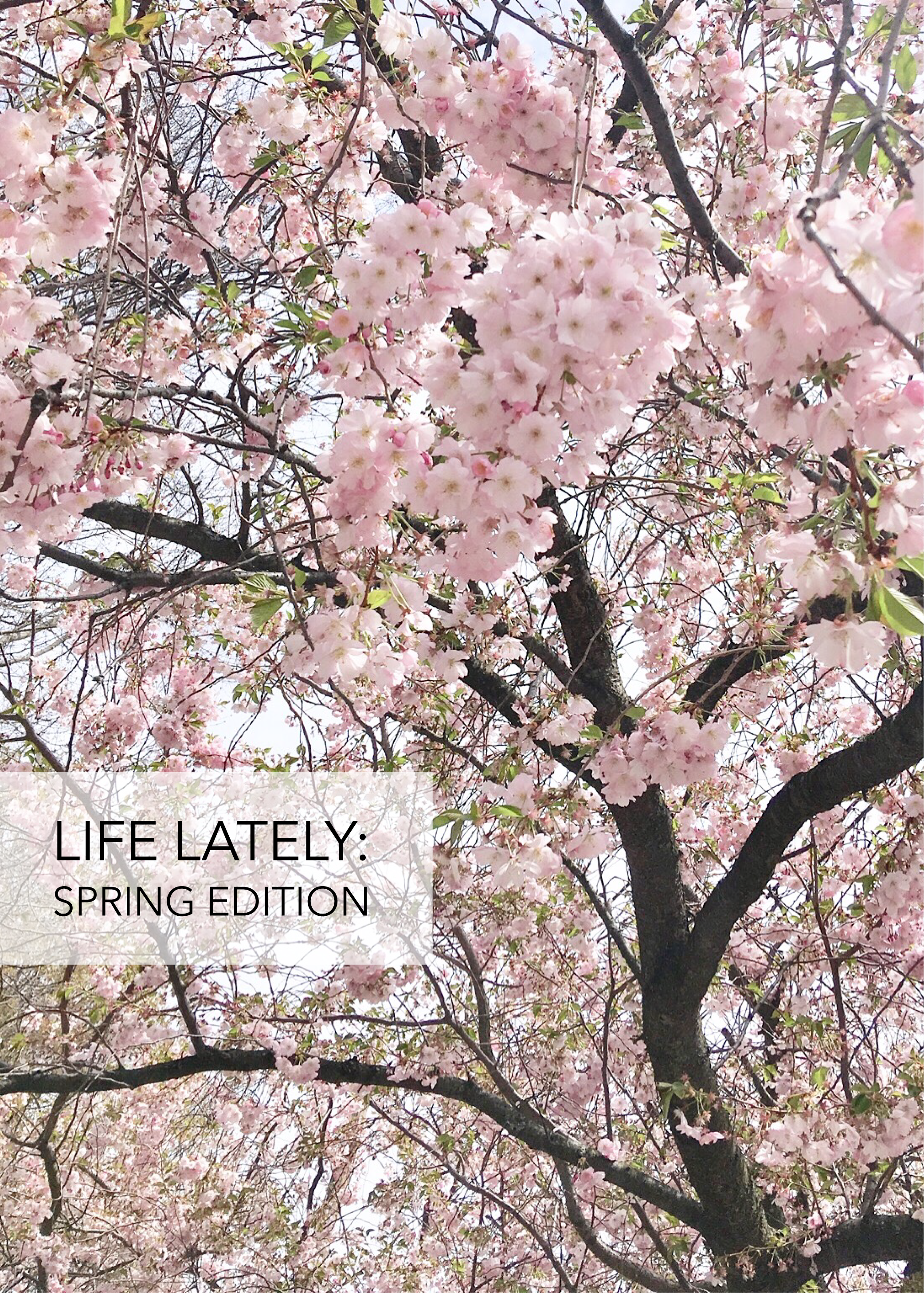 Life Lately: Spring Edition