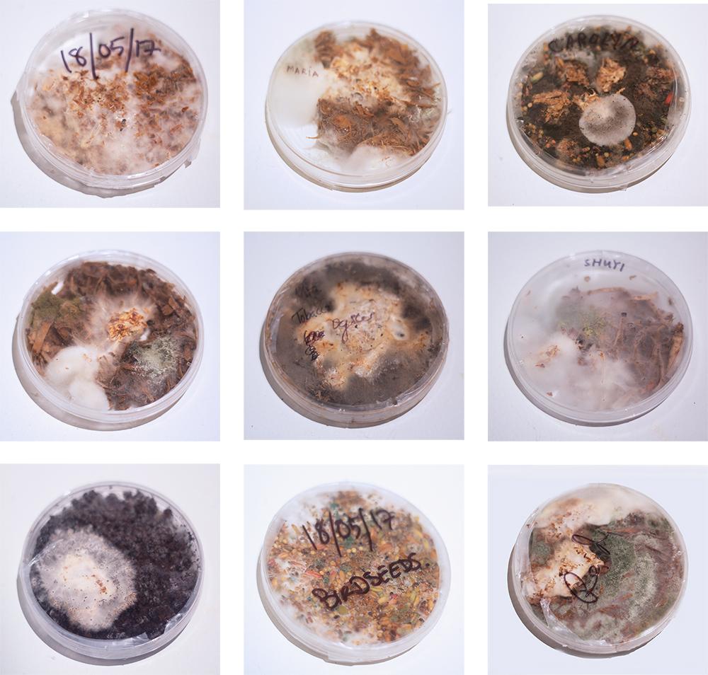 Catalogue of contaminated species  5.18-6.15 2017