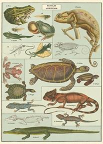 Reptiles & Amphibians Wrap