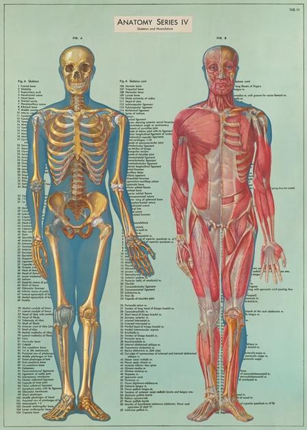 Anatomy Series Wrap