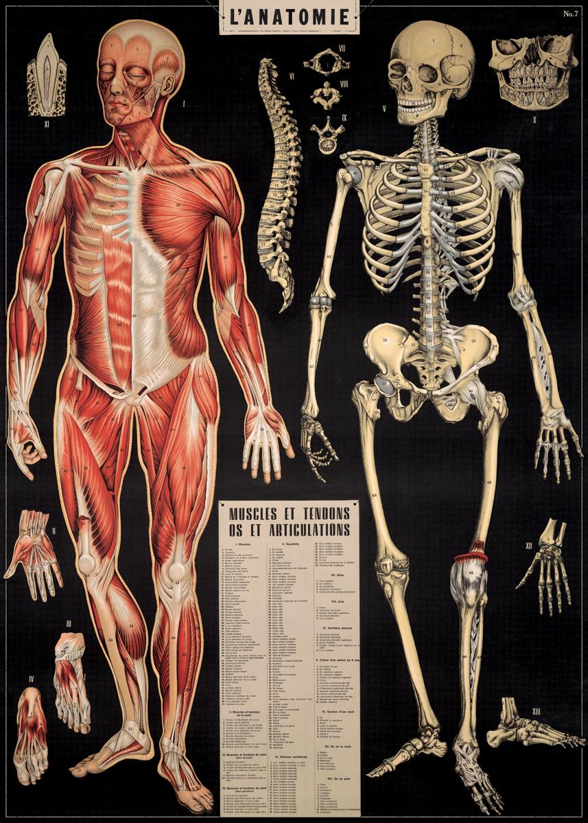 L'Anatomie Wrap