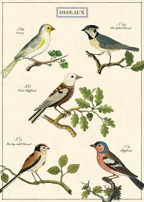 Oiseaux Wrap