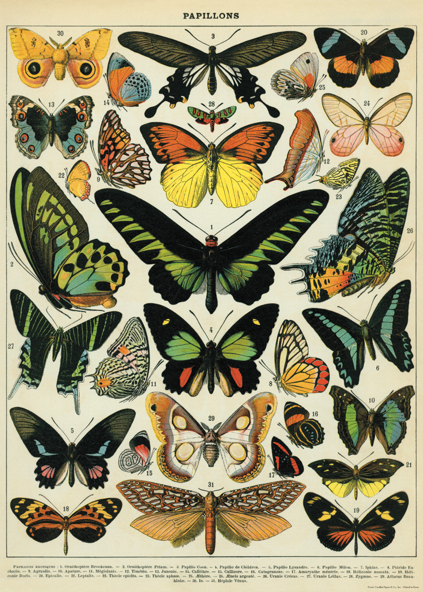 Butterflies Wrap