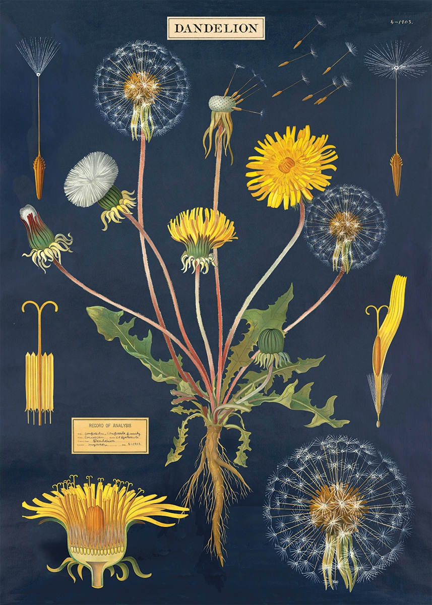 Dandelion Chart Wrap
