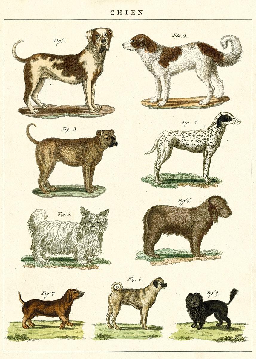Dog Chart Wrap