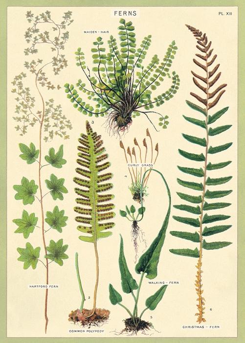 Ferns Wrap