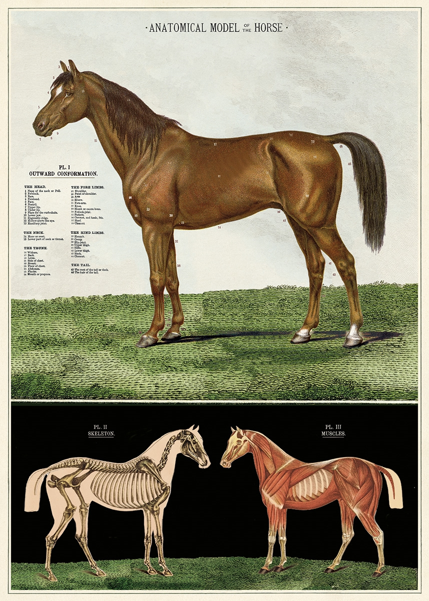 Horses Wrap