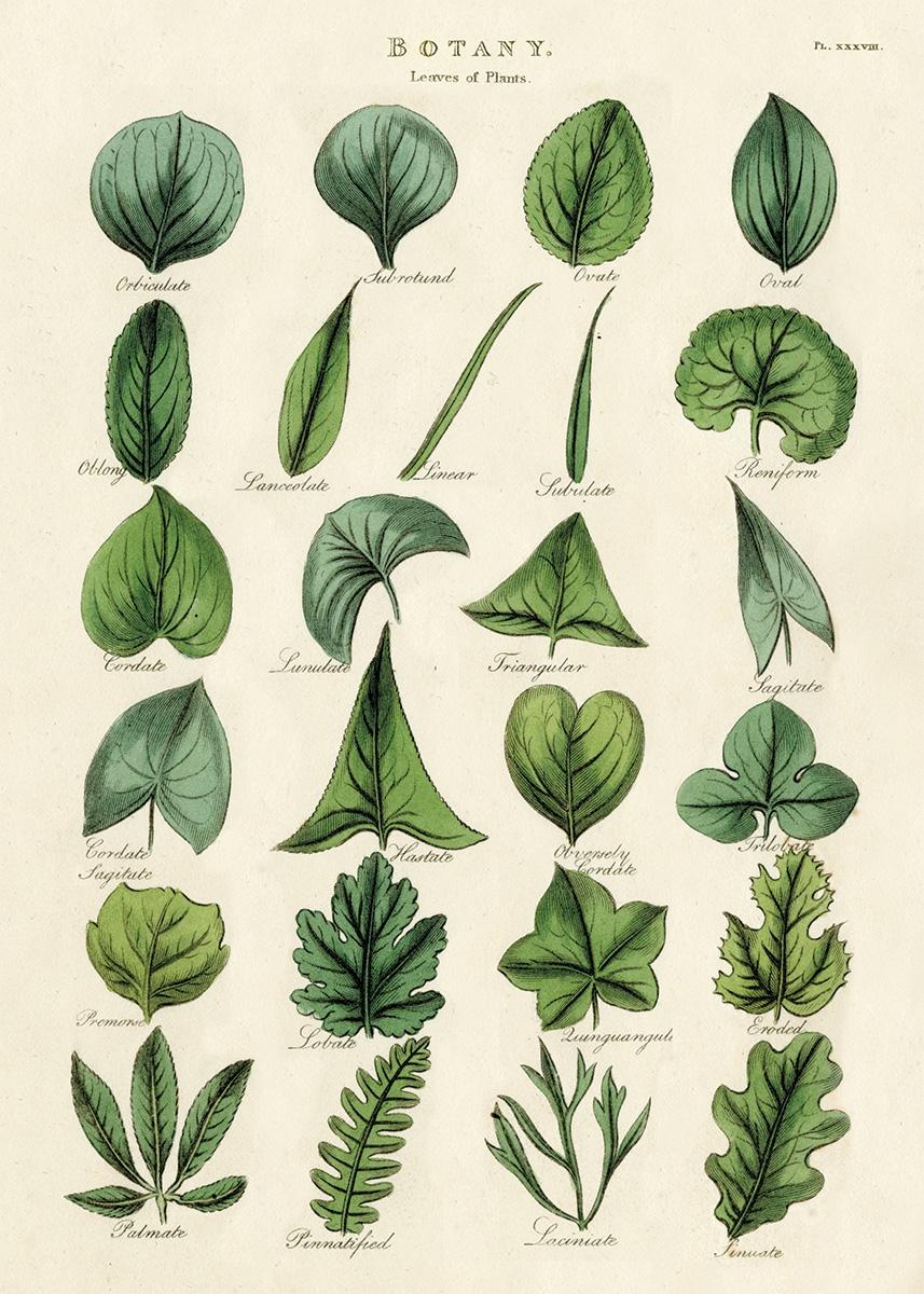 Botany Leaves Wrap