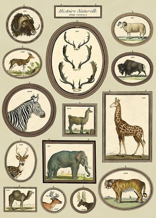 Natural History Animals Wrap