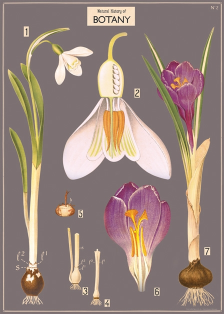 Botany Chart Wrap