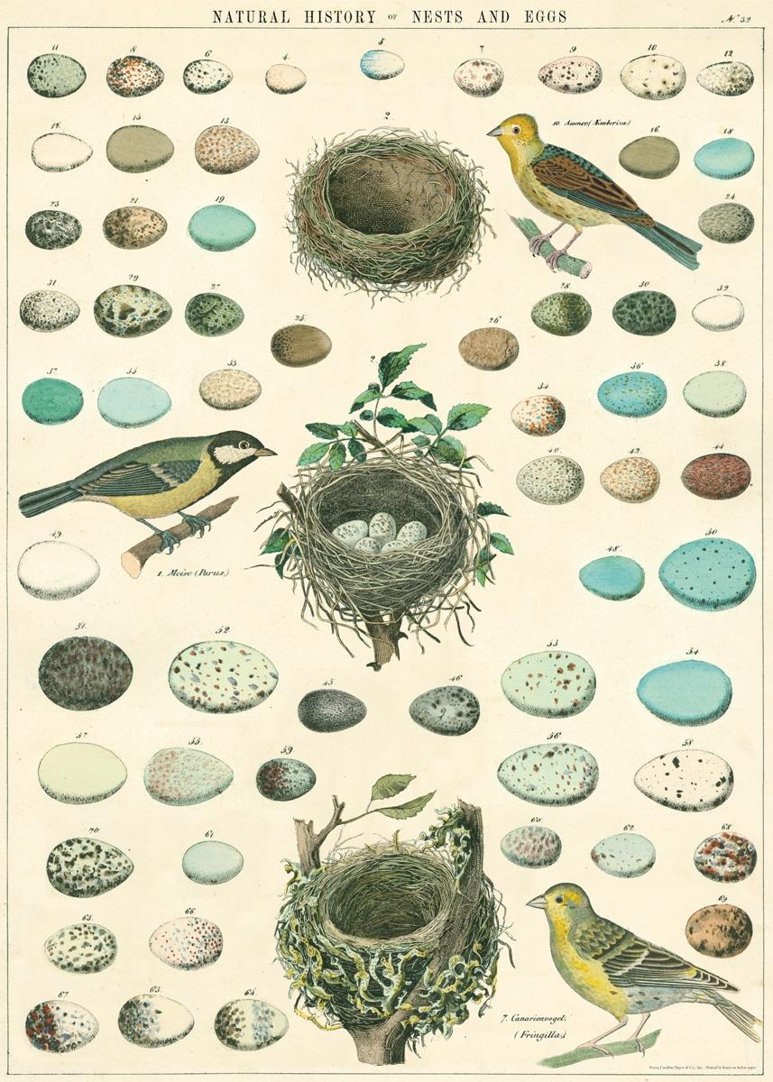 Birds, Nest & Eggs Wrap