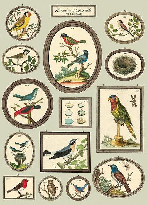 Natural History Birds 2 Wrap