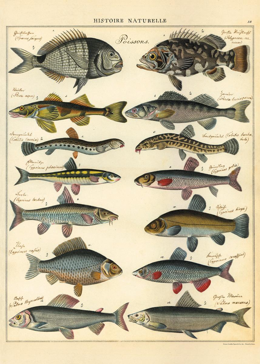 Natural History Fish Wrap
