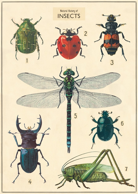 Insect Chart Wrap