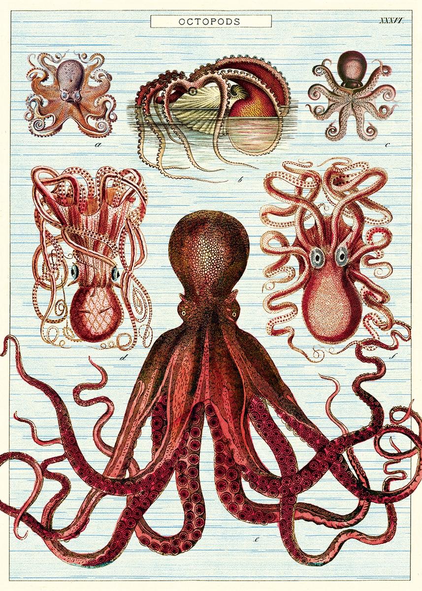 Octopods Wrap