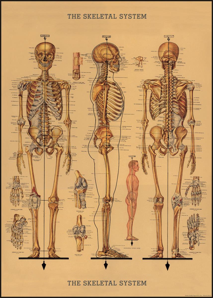 Skeleton Wrap