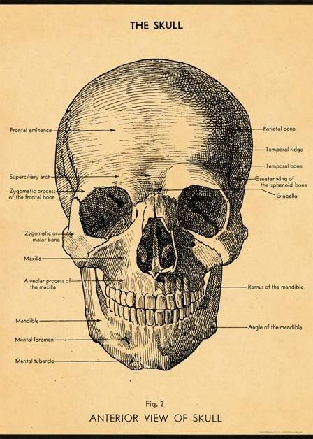 The Skull Wrap