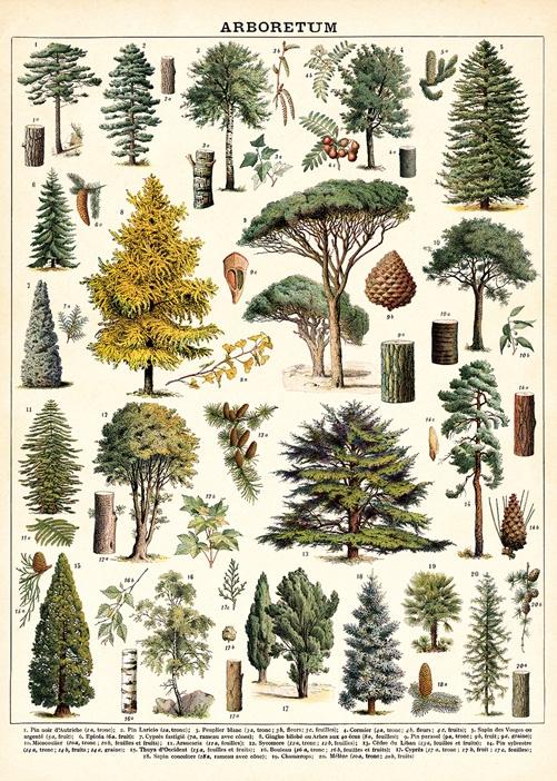 Arboretum Wrap