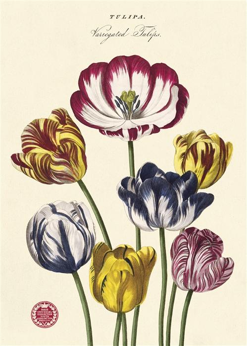 Tulips Wrap