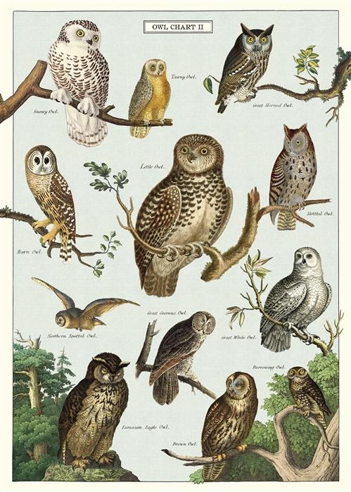 Owl Chart Wrap
