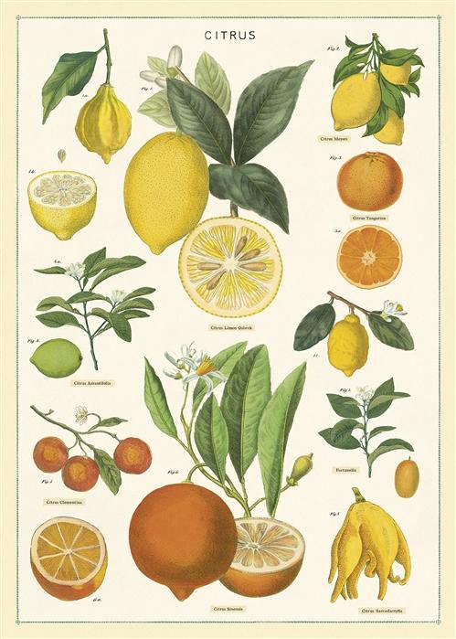 Citrus Wrap