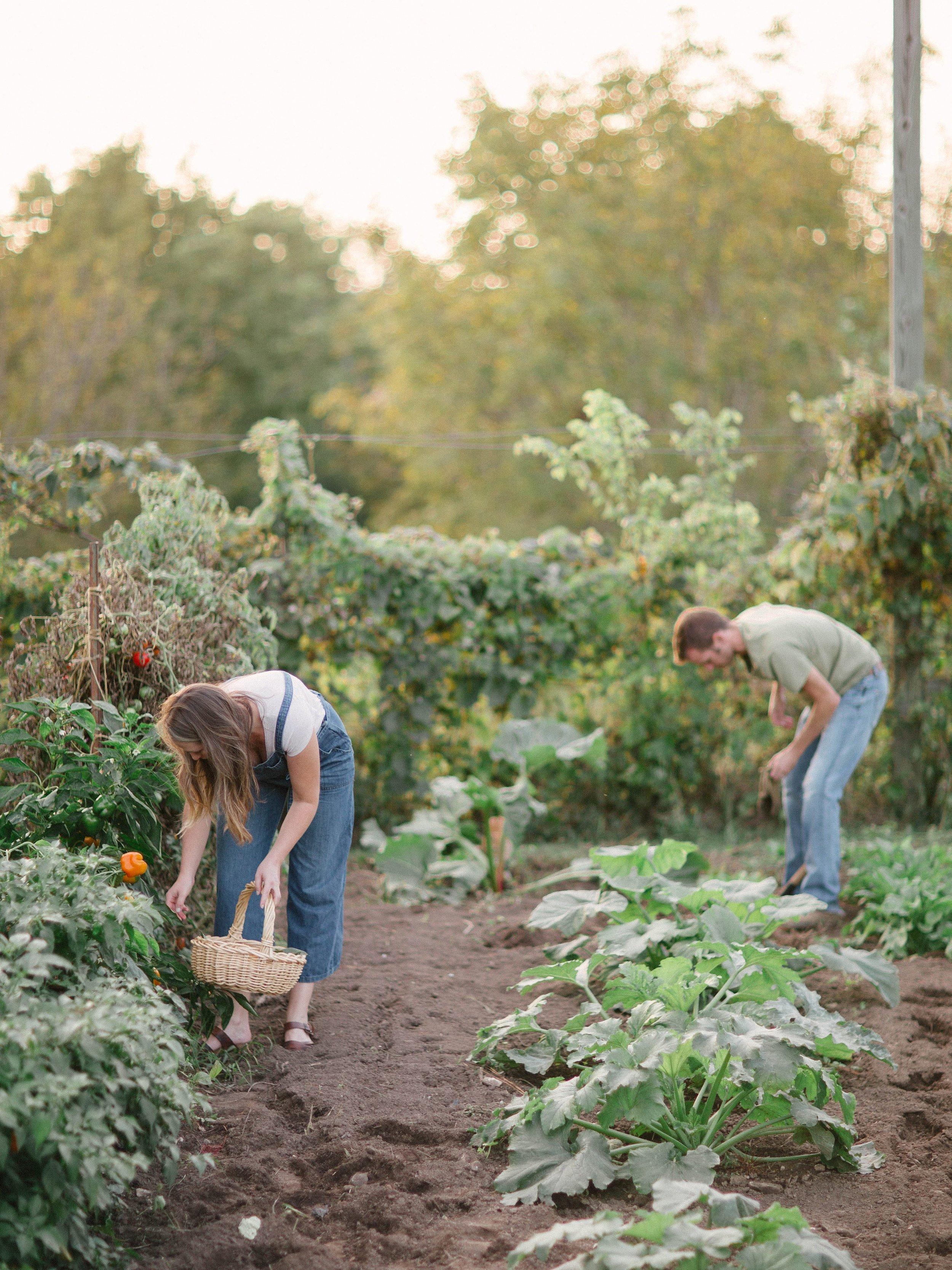vegetablegardenmorganworley_0003.jpg