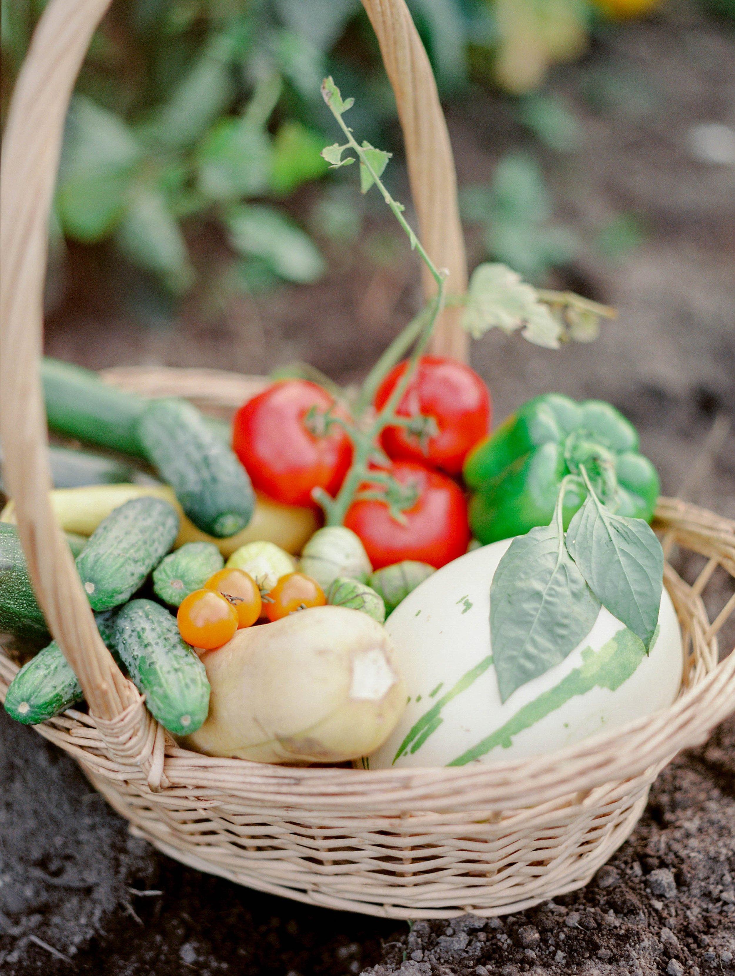 vegetablegardenmorganworley_0015.jpg