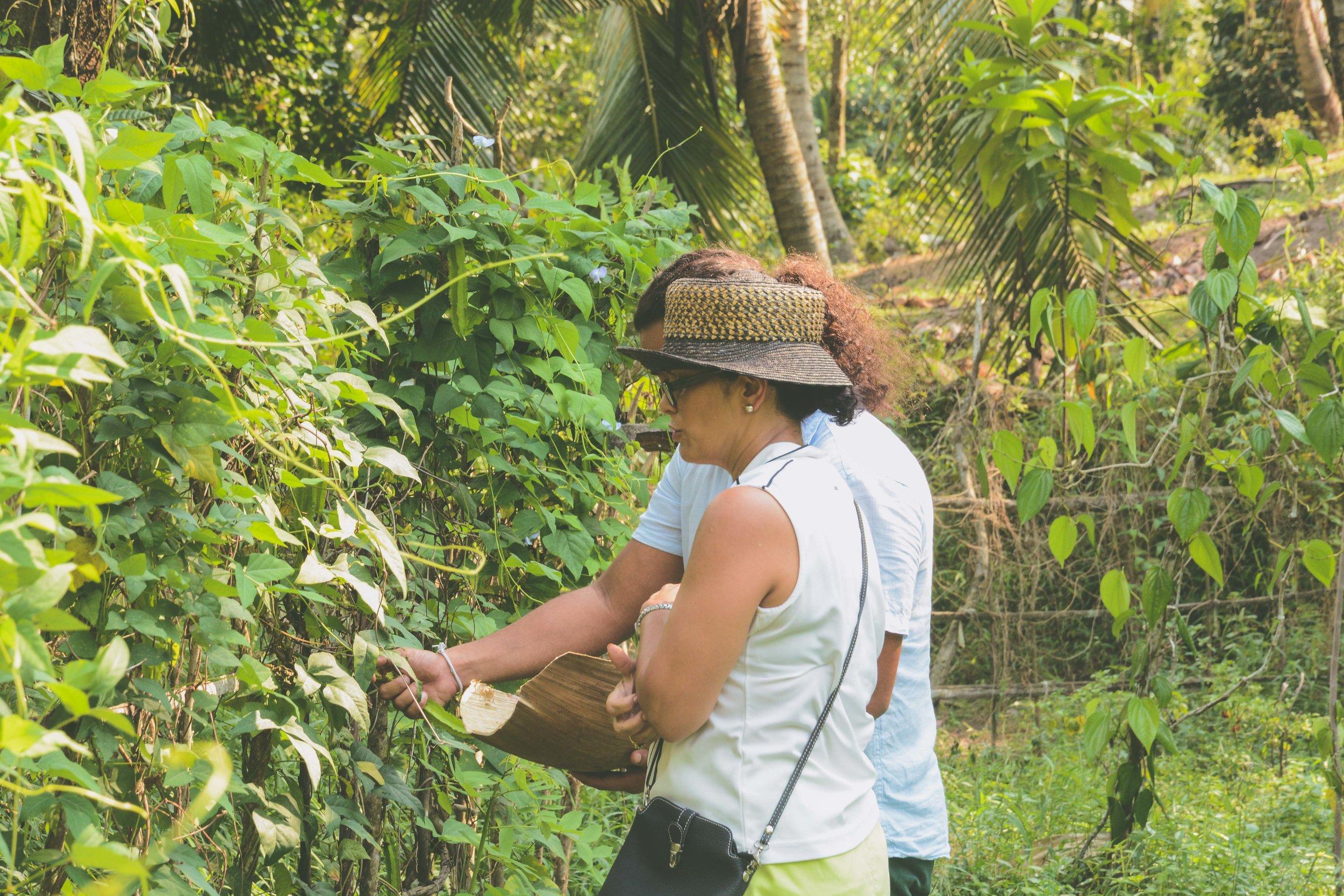 Farm to table Sri Lanka with Sk De Silva
