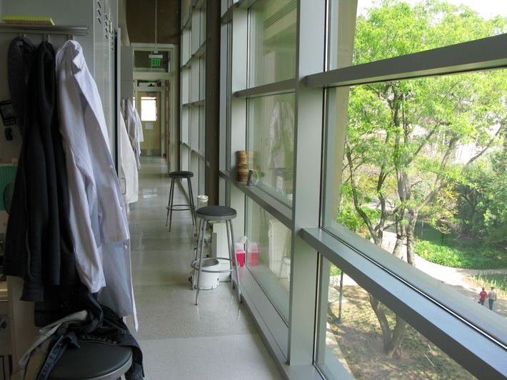 Large windows span the length of our lab, allowing plenty of natural light. Our lab overlooks the scenic San Pasqual Path