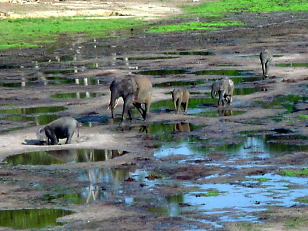 Storm and Elephants