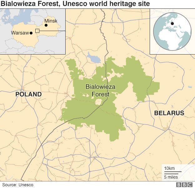 _96917425_poland_belarus_forest_map_v2_624.jpg