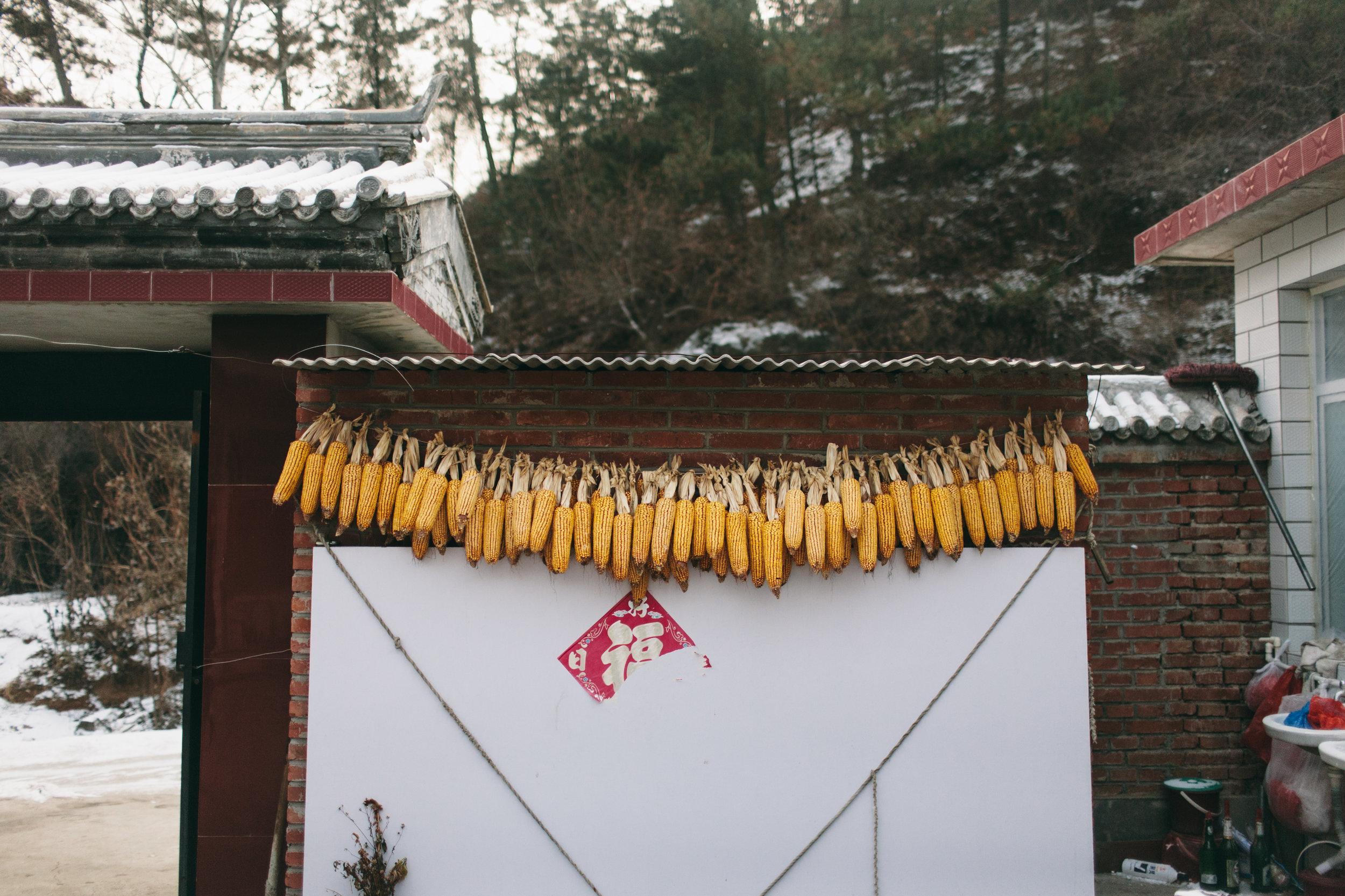 Corn Rows, Luanping County, Hebei China