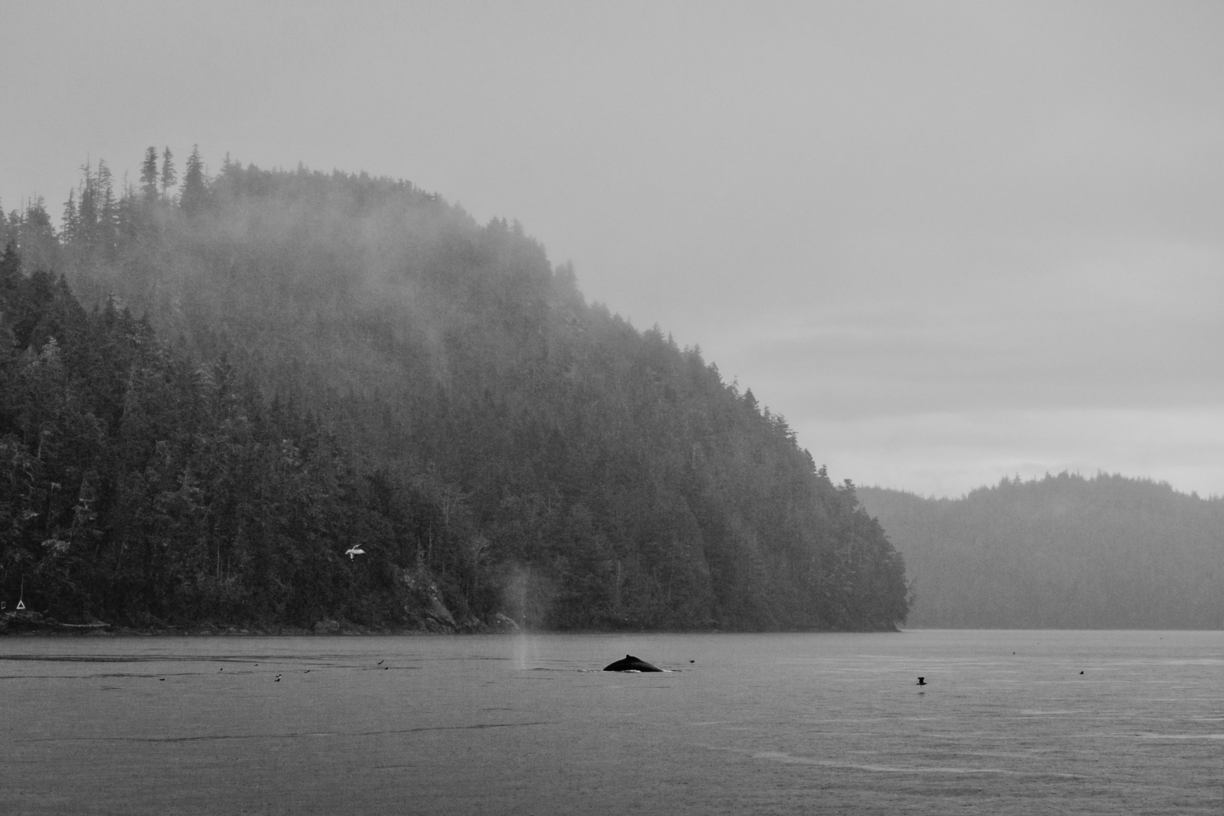whale-watching-telegraph-cove-00031.jpg