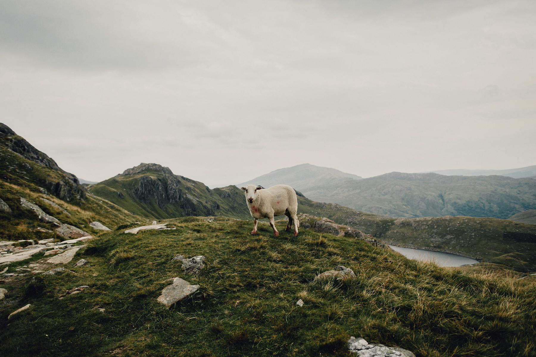 Mt-Snowdon-Hike-Photos-From-Peny-Pass-00201.jpg