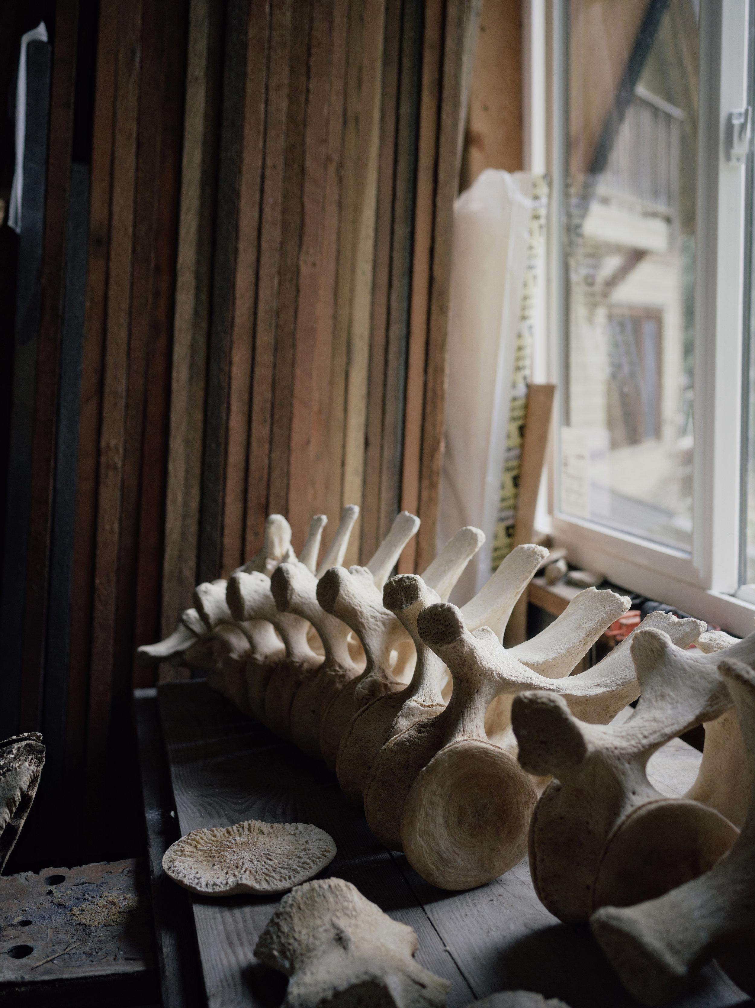 whale-skeleton-photos-taylorroades0459.JPG