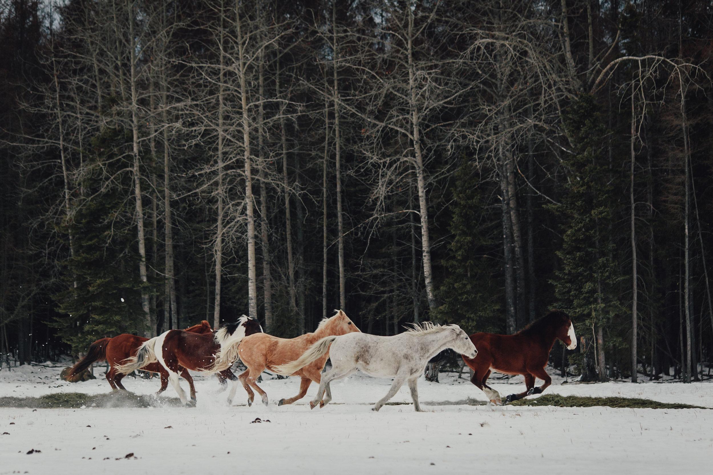 Vacations-of-the-Brave-Alberta-0179.JPG