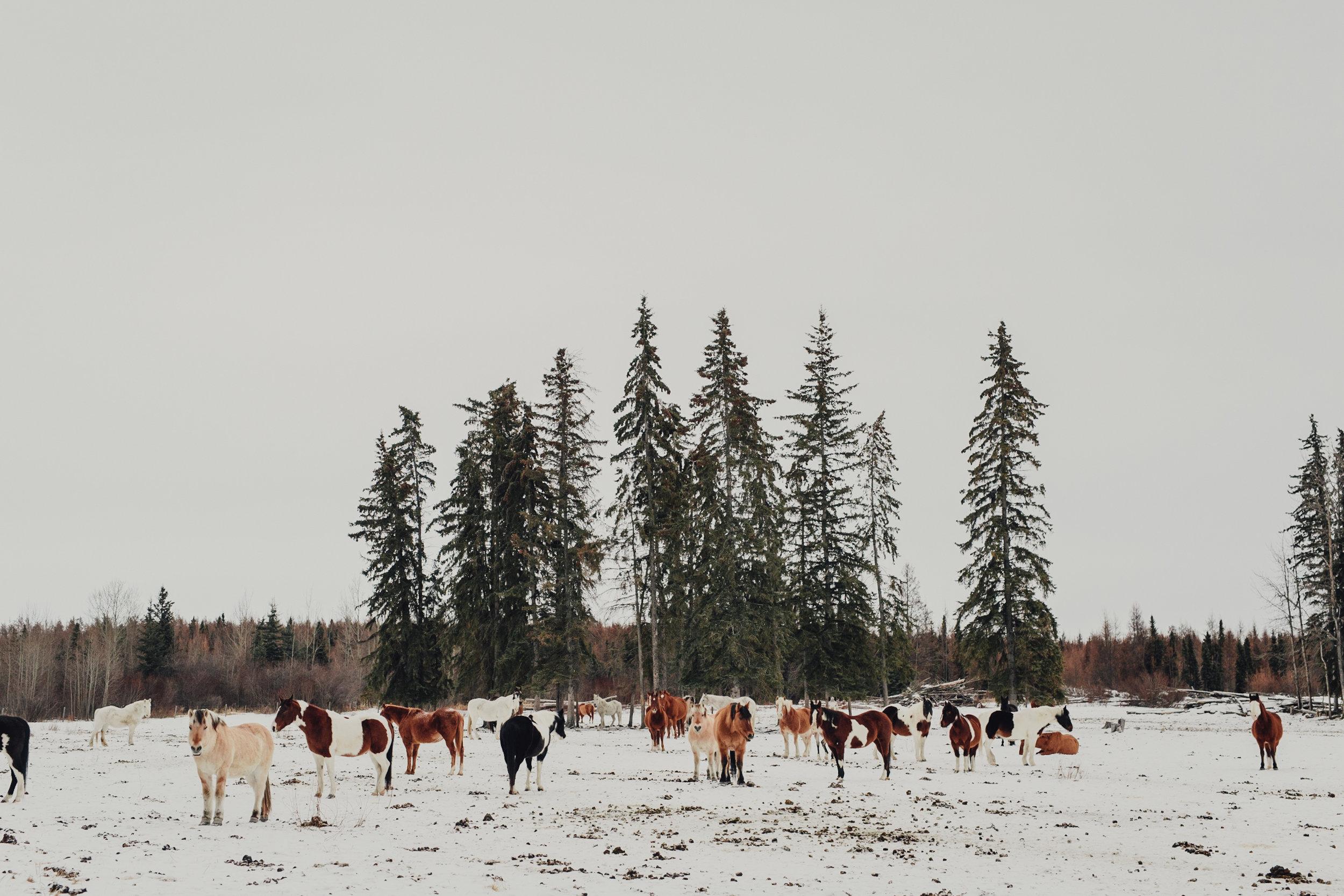 Vacations-of-the-Brave-Alberta-0141.JPG