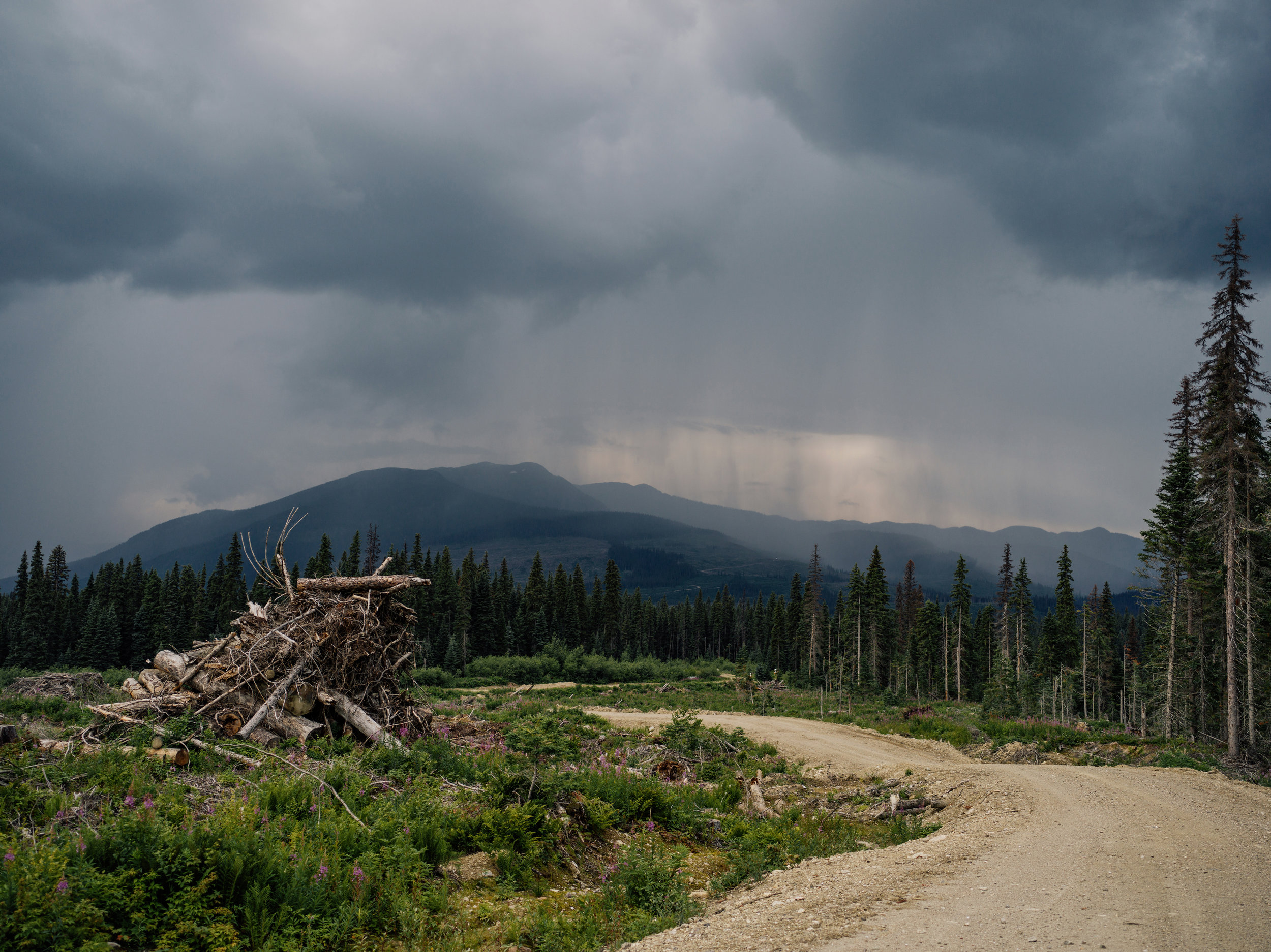 Inland-Temperate-Rainforest-TheNarwhal-0105.JPG