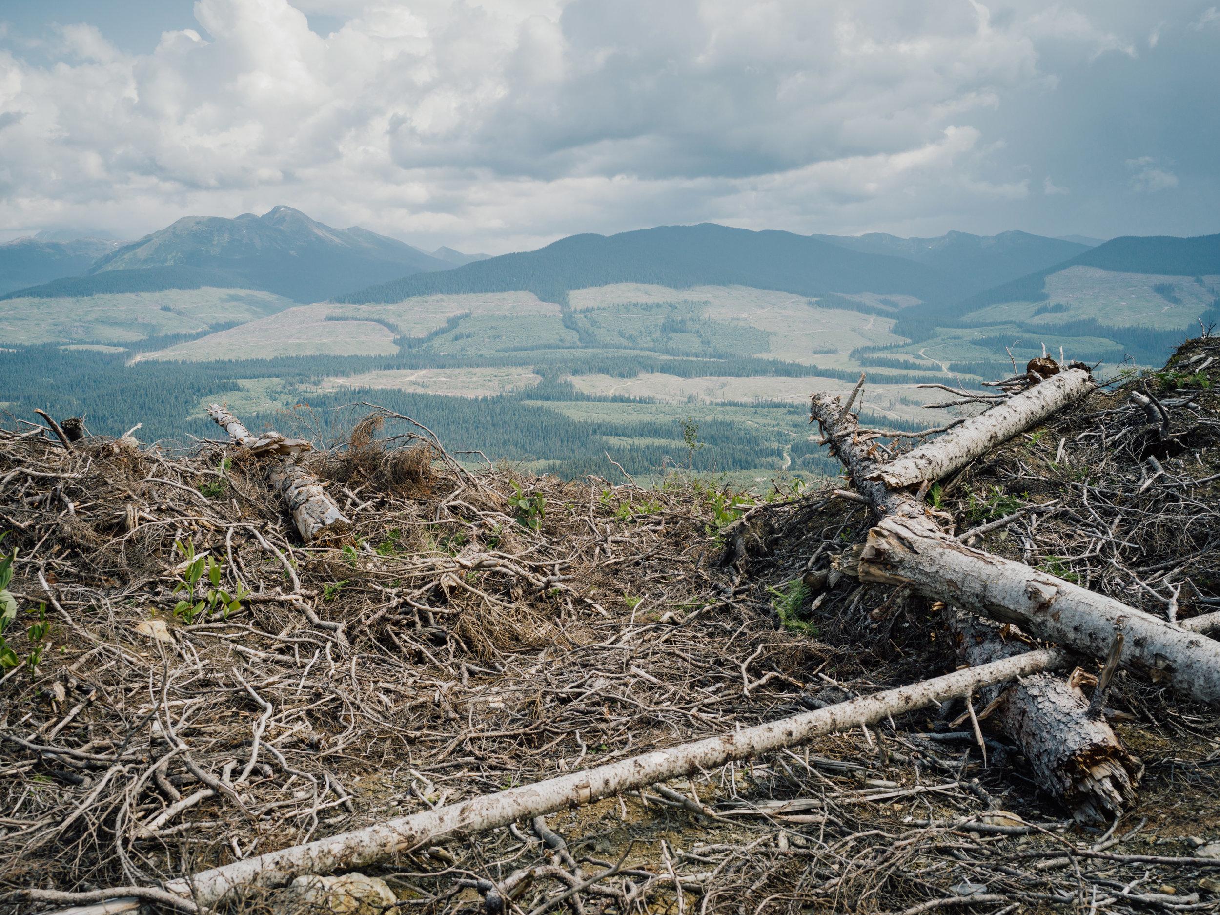 Inland-Temperate-Rainforest-TheNarwhal-0099.JPG