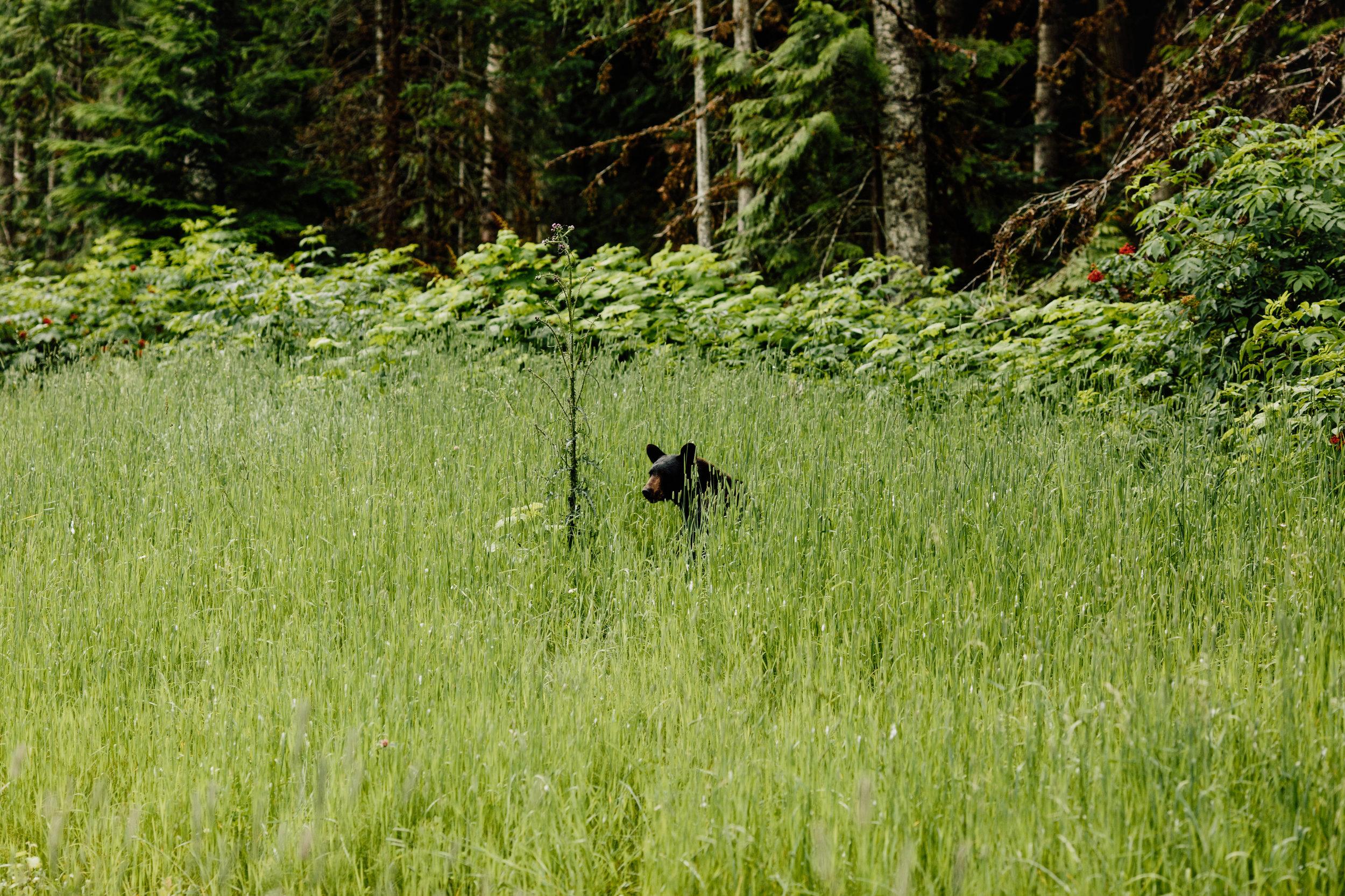 Inland-Temperate-Rainforest-TheNarwhal-0011.JPG