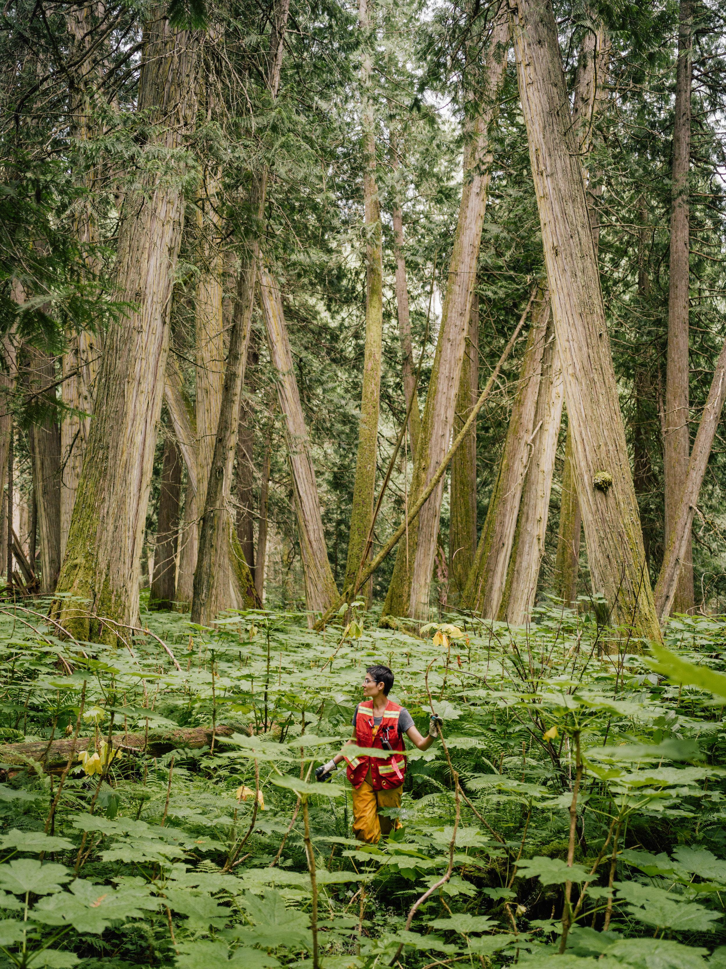 Inland-Temperate-Rainforest-TheNarwhal-0052.JPG