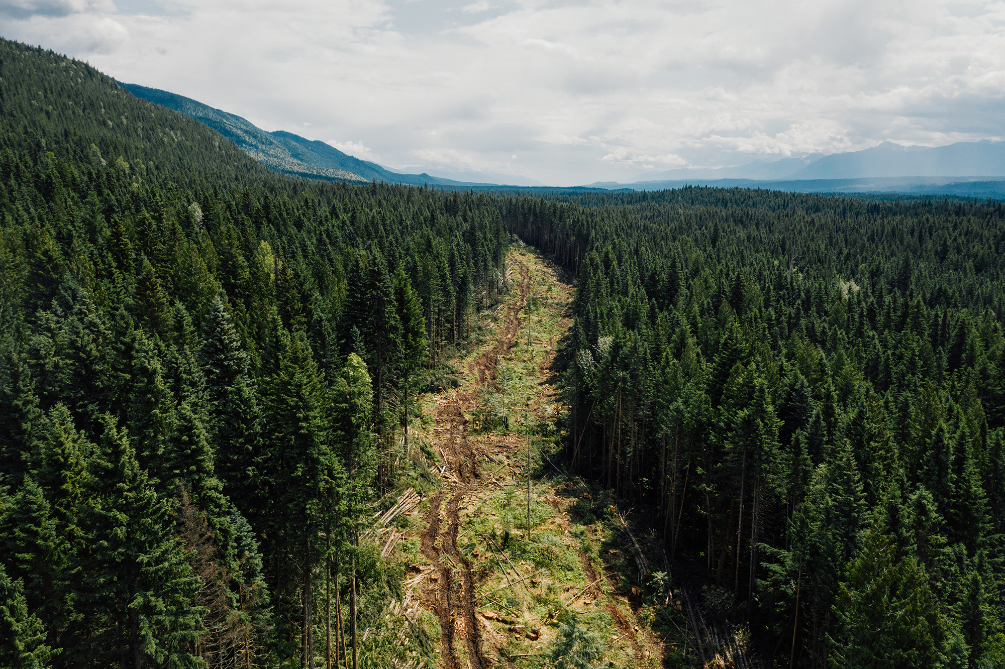 A new road being carved into the old-growth inland temperate rainforest east of Prince George, B.C., in preparation for logging.