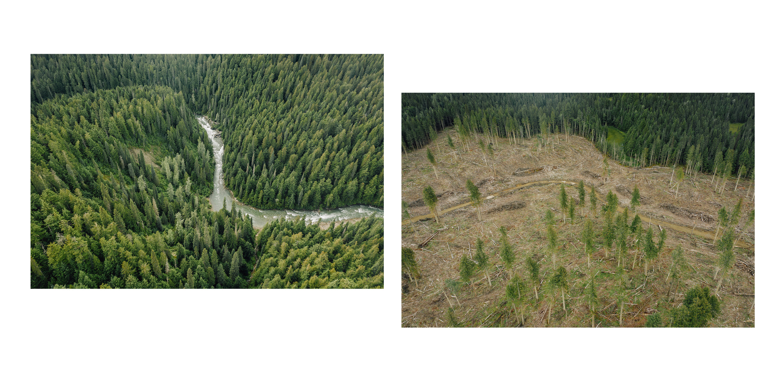 The Goat River valley (left) is one of only a few inland temperate rainforest watersheds that haven't been logged. Next to a clear cut near Hwy 16 West of Prince George BC