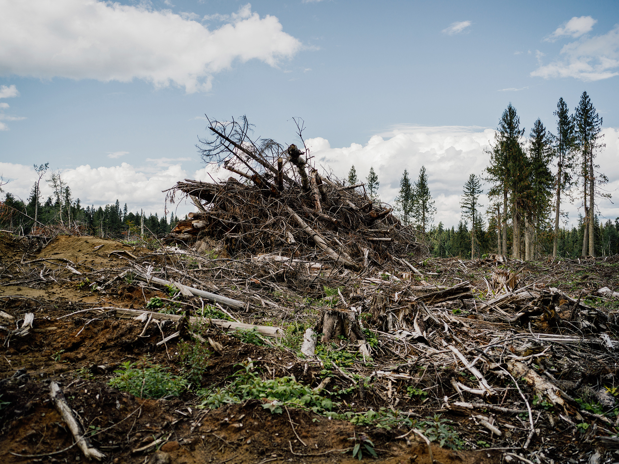 Clearcut near Highway 16, west of Prince George BC.