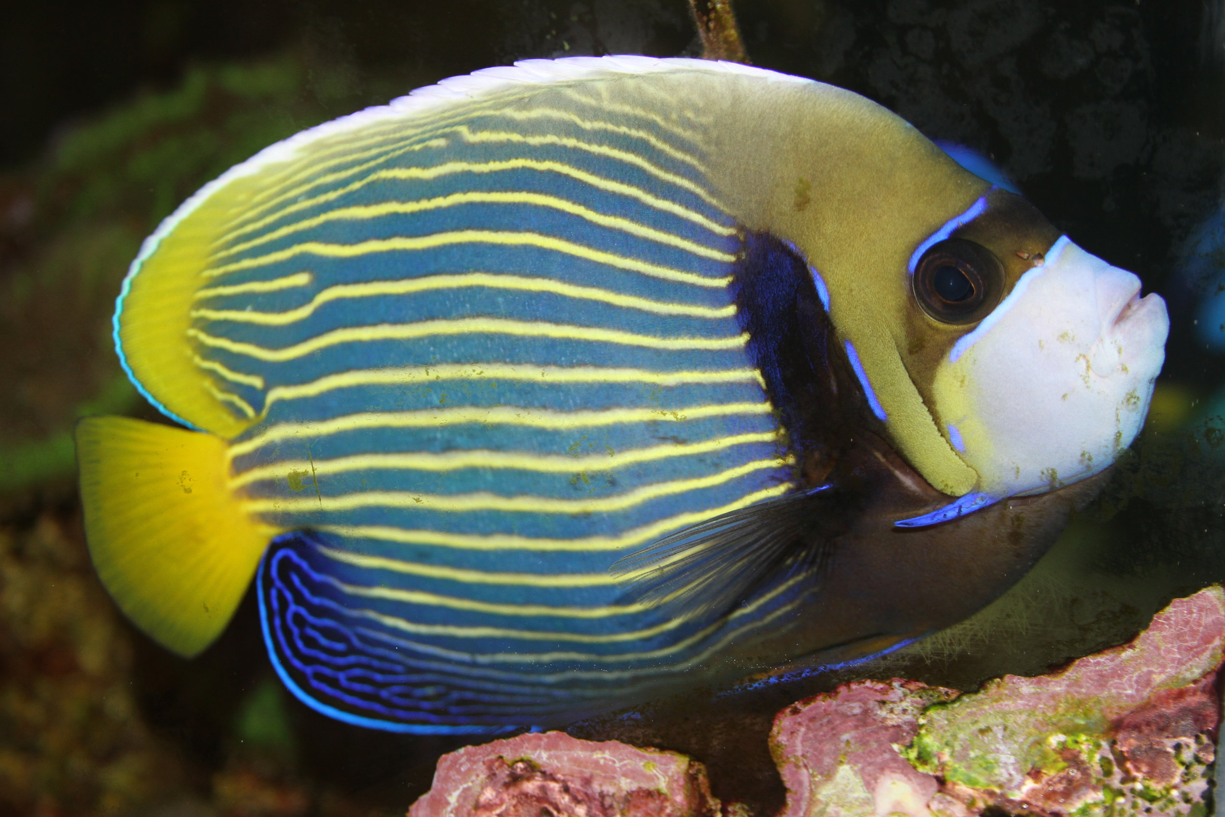 IMG_5926-(fish1).JPG