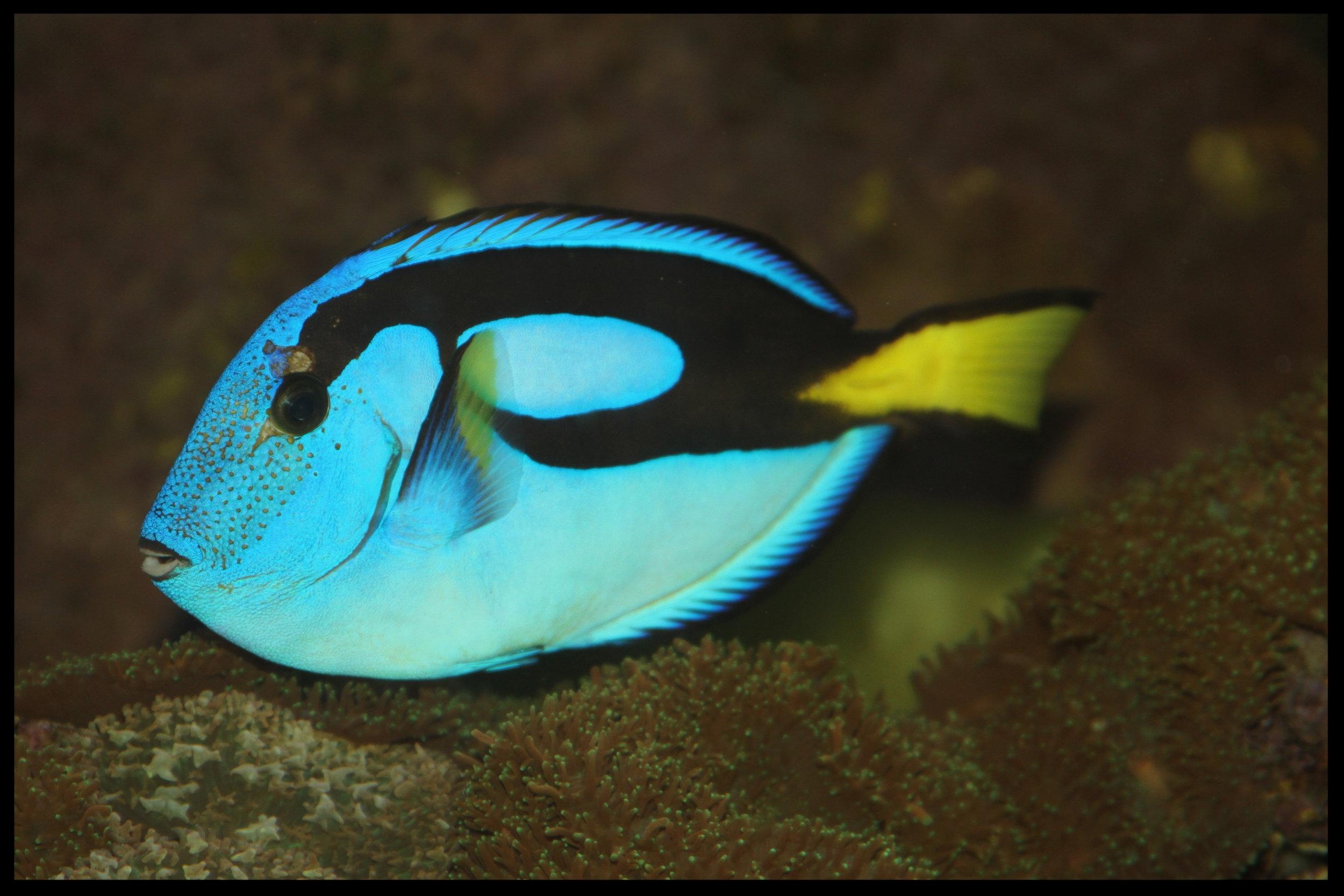 IMG_5930-(fish3).JPG