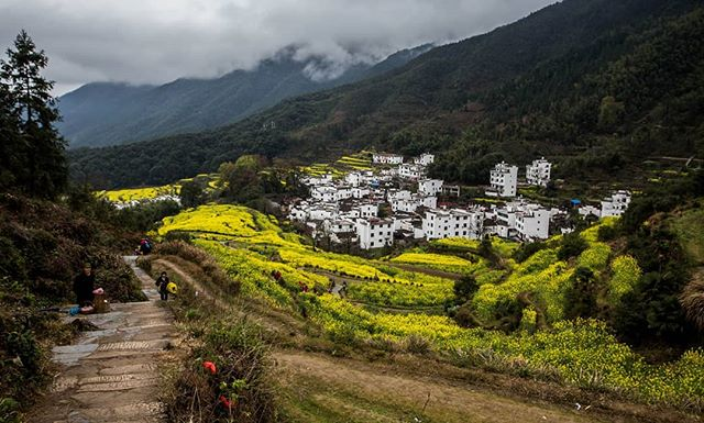 I've put my blog on the back burner for nearly a year since I've been focusing on my career in China. I've decided to start posting again where I'll post articles from my trips over the past two years. Say hello to Wuyuan. Read more at: https://www.theglobeisbeautiful.com/travel-stories/2019/4/wuyuan . . . . . . . . . . . . . . . . . . . #travelchina #traveltheworld #backpacking #wanderlust #travelphoto #travelphotography #springflowers #jiangxi #wuyuan #travelblogger #landscape #landscapephotography #canon #canon6d #canonphotography #natgeo #nationalgeographic #photooftheday #travelasia #chinatravel #instachina #travelporn #travelstagram #instatravel #rapeseedblossoms #rapeseed #canola #chinesearchitecture #traditionalchinese #chinesehistory