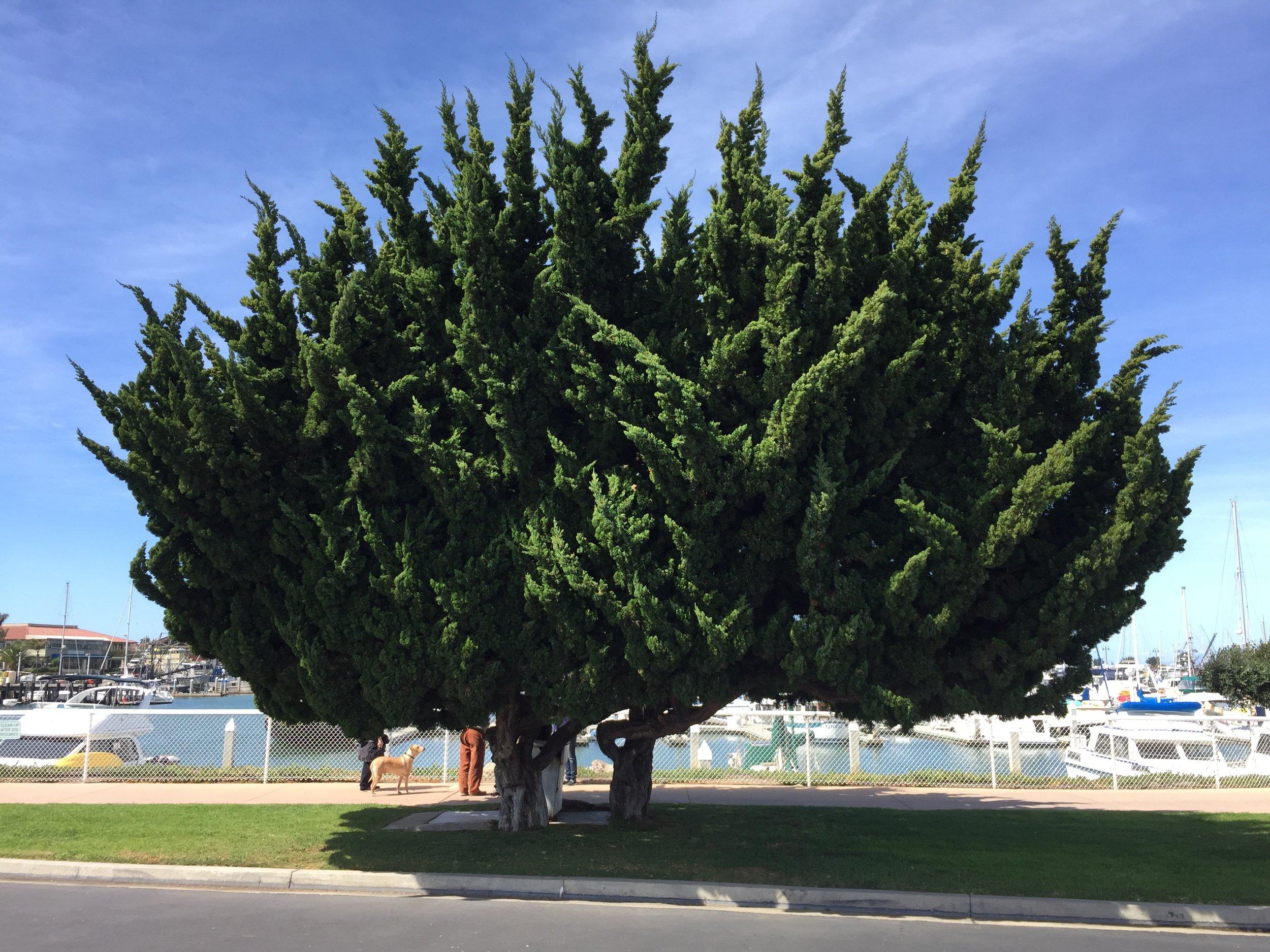Ventura Harbor, CA  2016